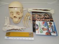 Bone Detective