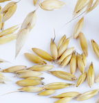 Cover Crop Seed - Oat Seed