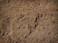Bulk - Topsoil Blend