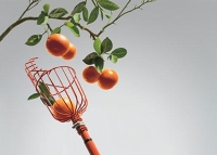 Telescoping Fruit Picker
