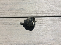 1 1/2 inch hole saw