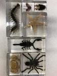 Invertebrate Kit