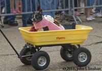 Wagon Cart Thing