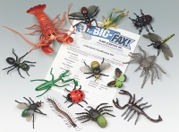 Arthropod Classification Kit