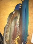 Assorted Bird Feathers Collection