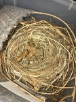 Assorted Bird Nests Collection