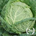 Vegetables: Fall Bundle