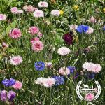 Beneficial Flowers Seed Bundle