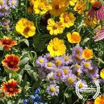 Wildflower Mix: Bee Feed Blend