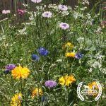 Wildflower Mix: Native Blend
